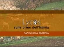 lycos san nicola