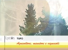 Lycos tufo